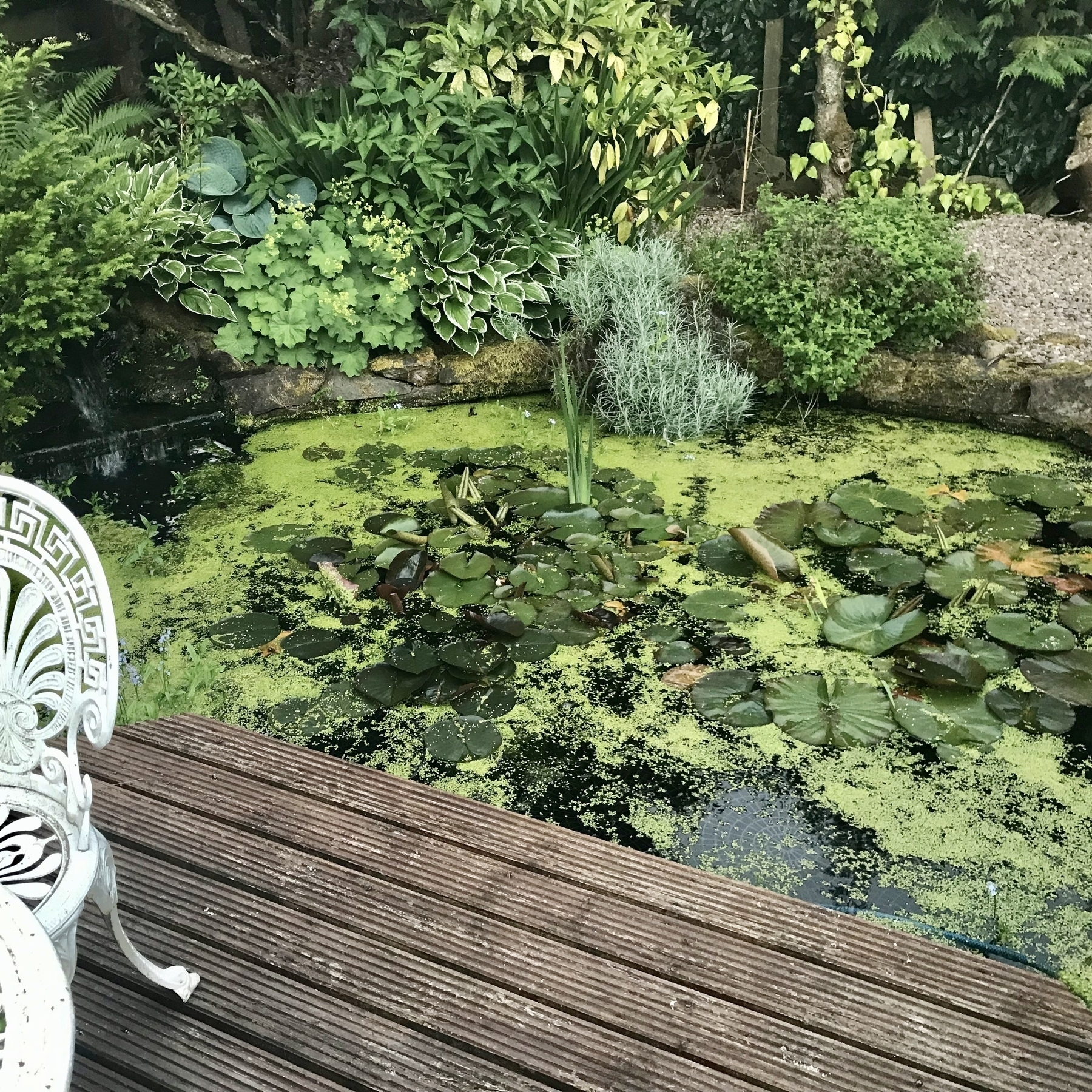Tranquil pond with small waterfall.